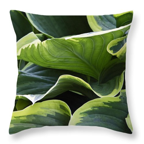 Hosta Throw Pillow featuring the photograph Hosta by David Freuthal