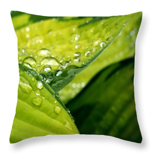 Fern Throw Pillow featuring the photograph Hosta Droplets I by Valerie Fuqua