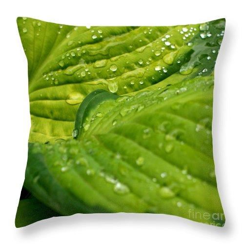 Garden Throw Pillow featuring the photograph Hosta Droplets II by Valerie Fuqua
