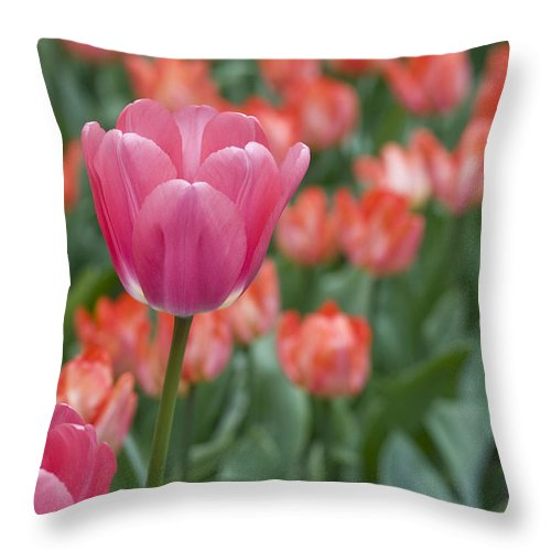 Bloom Throw Pillow featuring the photograph Hot Pink by Juli Scalzi
