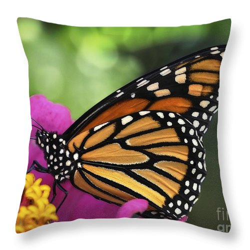 Nymphalidae Throw Pillow featuring the photograph Hot Windy Day by Chris Fleming
