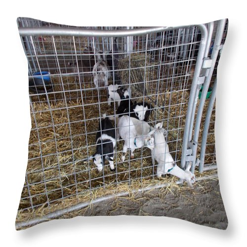 Livestock Throw Pillow featuring the photograph Houdini Wanna Be by Mark Victors