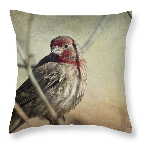 Bird Throw Pillow featuring the photograph House Finch Two by Dianne Phelps