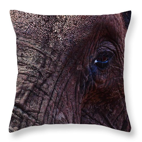 Alankomaat Throw Pillow featuring the photograph How About Memories by Jouko Lehto