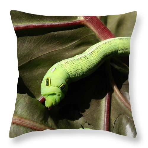 Worm Throw Pillow featuring the photograph How Do I Look by Dickson Shia