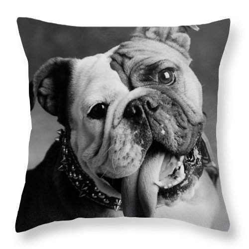 Bull Dog Throw Pillow featuring the photograph Huh by Jill Reger