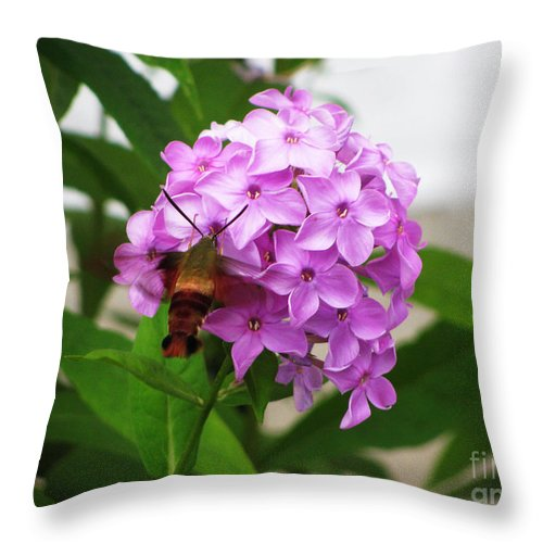 Flower Throw Pillow featuring the photograph Humingbird Moth by Nancie Johnson