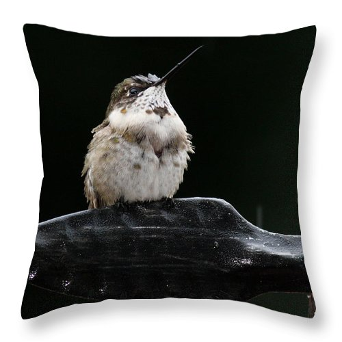Throw Pillow featuring the photograph Hummer In The Rain II by Douglas Stucky