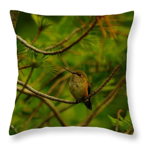 Hummingbirds Throw Pillow featuring the photograph Humming Birds Perched by Jeff Swan