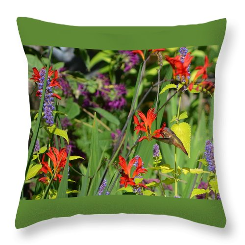 Hummingbird Throw Pillow featuring the photograph Hummingbird And Crocosmia Lucifer by Michelle Calkins