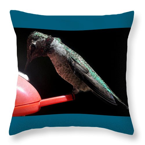 Male Throw Pillow featuring the photograph Hummingbird Anna's Eating On Perch by Jay Milo