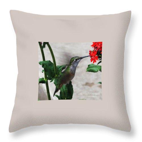 Nature Bird Throw Pillow featuring the photograph Hummingbird Feeding by Greg Plamp