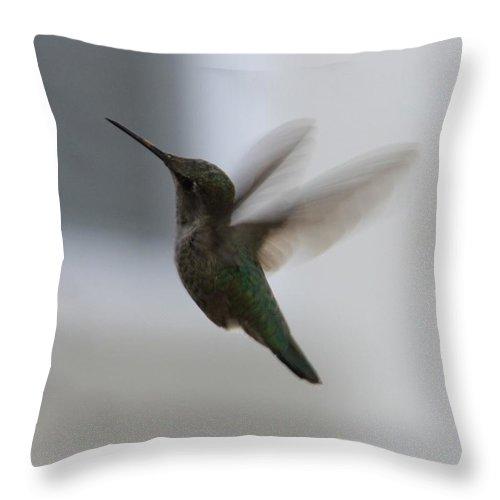 Hummingbird Throw Pillow featuring the photograph Hummingbird In Flight by Carol Groenen