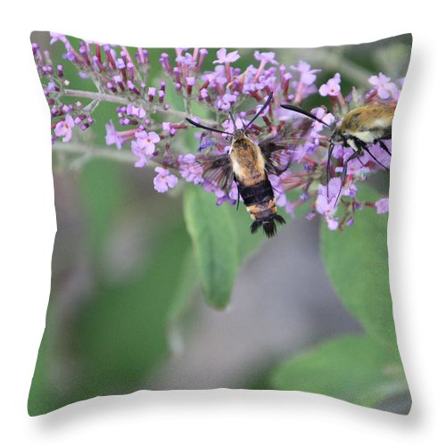 Moth Throw Pillow featuring the photograph Hummingbird Moths by Ericamaxine Price