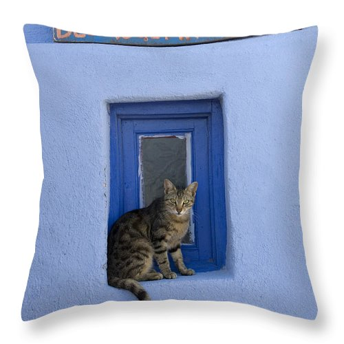 Cat Throw Pillow featuring the photograph Humorous Cat Sign by Jean-Louis Klein and Marie-Luce Hubert