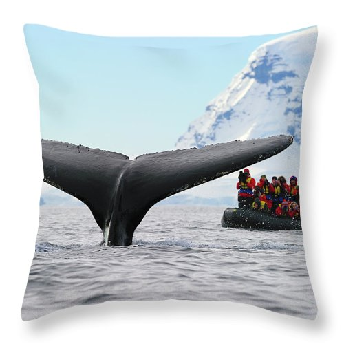 Humpback Whale (megaptera Novaeangliae) Throw Pillow featuring the photograph Humpback Whale Fluke by Tony Beck