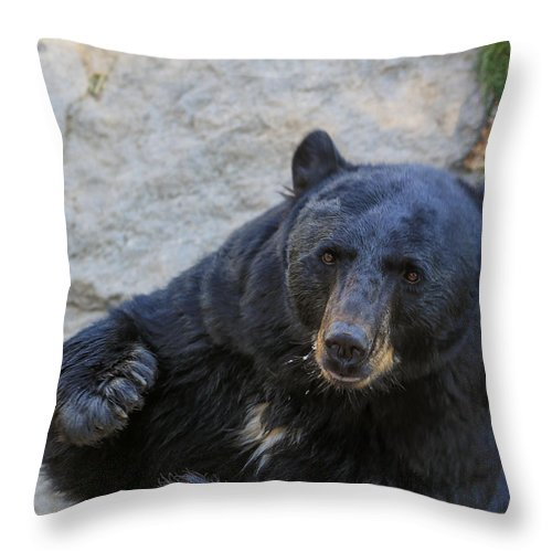 Bear Throw Pillow featuring the photograph Hungry Bear by M W Kearney