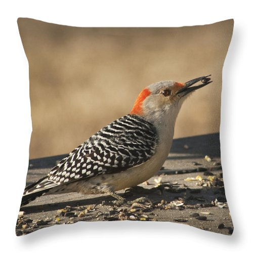 Melanerpes Carolinus Throw Pillow featuring the photograph Hungry Red-bellied Woodpecker - Melanerpes Carolinus by Kathy Clark