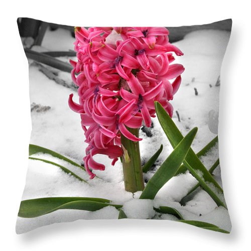 Hyacinth Throw Pillow featuring the photograph Hyacinth In The Snow by E B Schmidt