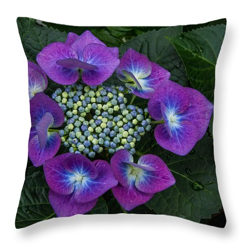 Hydranga Throw Pillow featuring the photograph Hydranga by Roger Mullenhour