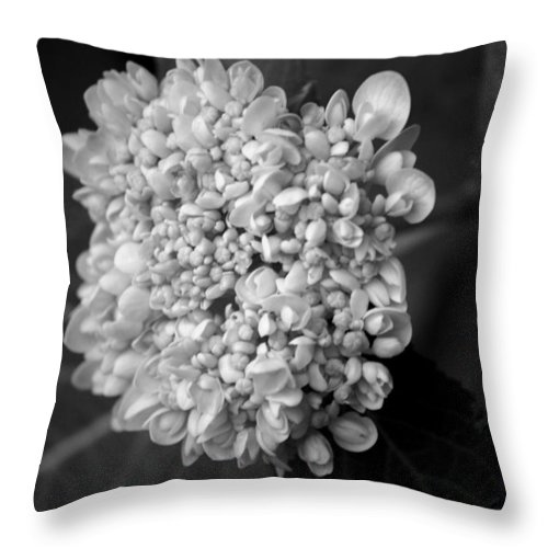 Flower Throw Pillow featuring the photograph Hydrangea 3 by David Weeks