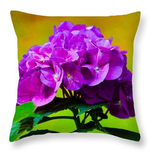 Hydrangea Throw Pillow featuring the photograph Hydrangea by Robert L Jackson