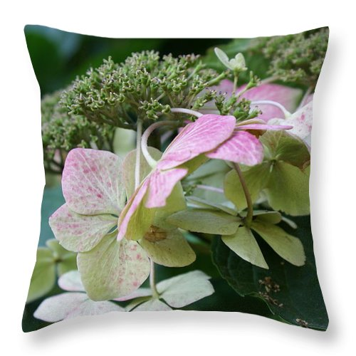 Hydrangea Throw Pillow featuring the photograph Hydrangea White And Pink I by Jacqueline Russell