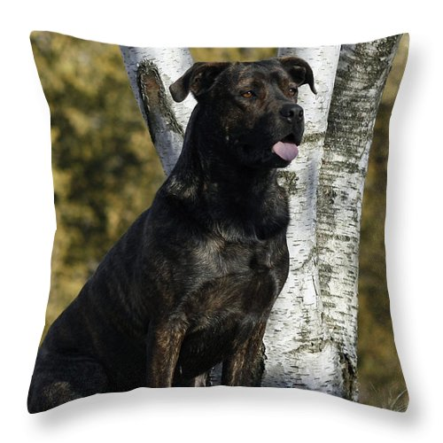 I Have Been Such A Good Dog Throw Pillow featuring the photograph I Have Been Such A Good Dog by Inspired Nature Photography Fine Art Photography