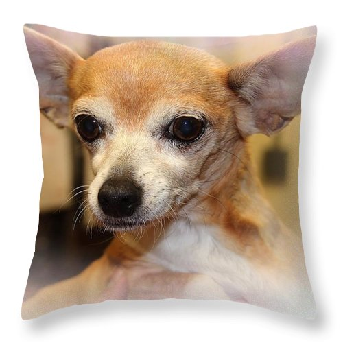 Chihuahua Throw Pillow featuring the photograph I Hear Everything by Joyce Baldassarre