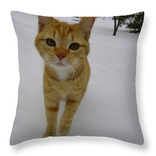 Kitty Throw Pillow featuring the digital art I Need My Ear Muffs by Matthew Seufer