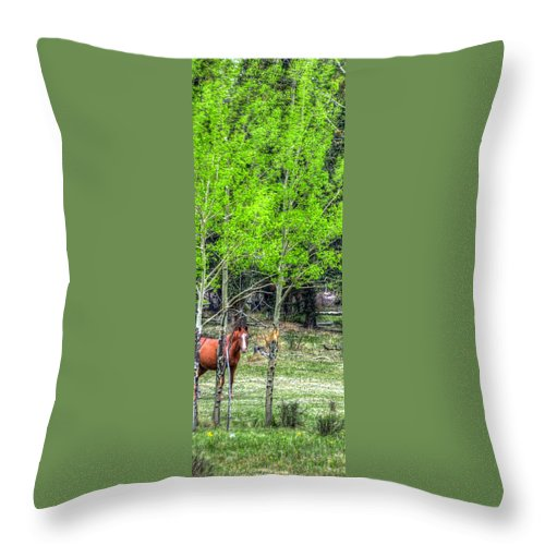 Divide Throw Pillow featuring the photograph I See You 6172 by Jerry Sodorff
