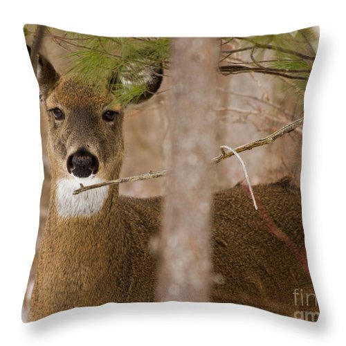 Deer Throw Pillow featuring the photograph I See You - Again by Rod Best