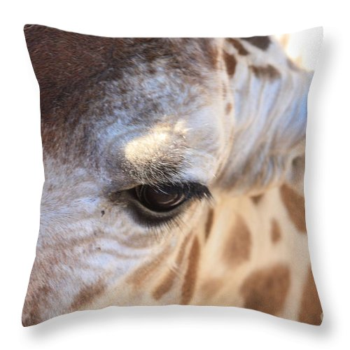 Giraffe Throw Pillow featuring the photograph I See You by Brandi Maher