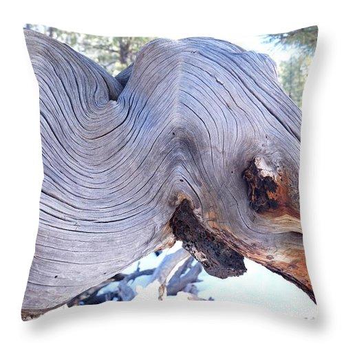 Ponderosa Throw Pillow featuring the photograph I Spy An Elephant by Kerri Mortenson