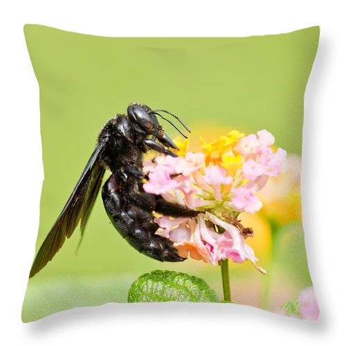 Carpenter Bee Throw Pillow featuring the photograph I Want Pollen by Scott Carruthers