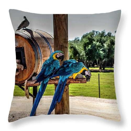 Birds Throw Pillow featuring the photograph I Wont Be Ignored by Michael Damiani