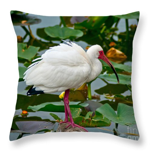 Ibis Throw Pillow featuring the photograph Ibis In Pond by Stephen Whalen