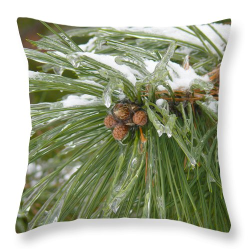 Pine Cone Throw Pillow featuring the photograph Iced Over Pine Cones by Tracy Winter