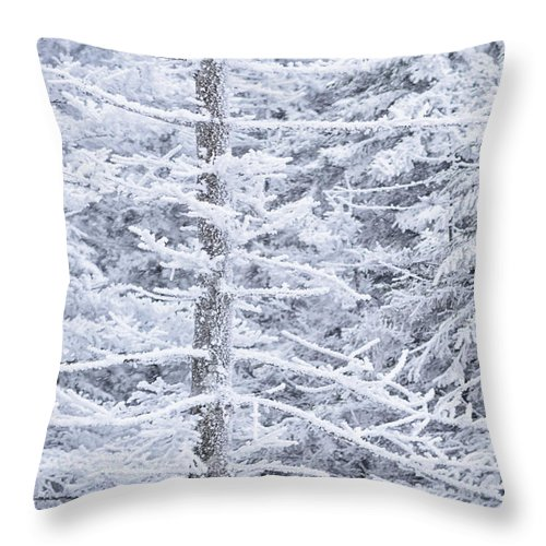 Winter Throw Pillow featuring the photograph Iced Trees by Thomas R Fletcher