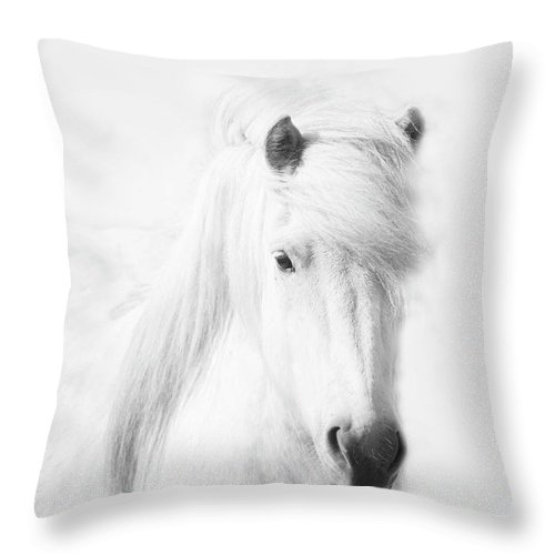 White Background Throw Pillow featuring the photograph Icelandic Pony In White by Grant Faint