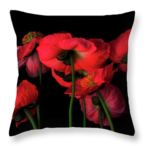 California Throw Pillow featuring the photograph Icelandic Poppies - The View From Down by Bill Gracey