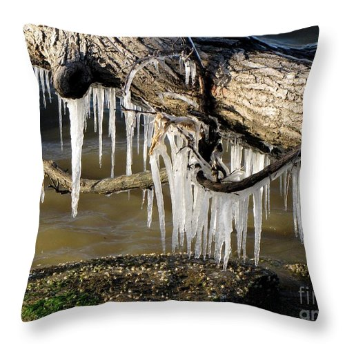 Schuminweb Throw Pillow featuring the photograph Icicles Hang From Tree Limb by Ben Schumin
