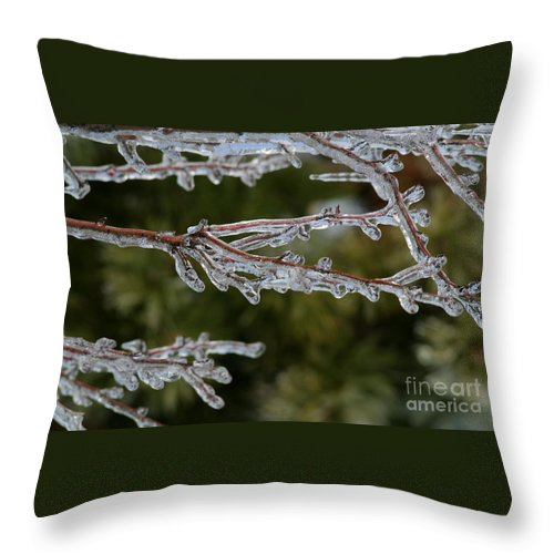 Ice Throw Pillow featuring the photograph Icy Branch-7482 by Gary Gingrich Galleries
