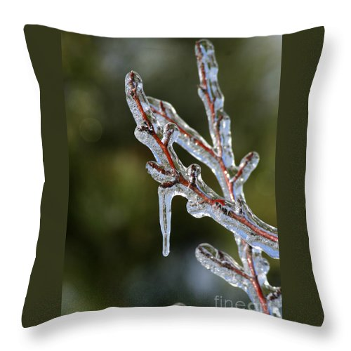 Ice Throw Pillow featuring the photograph Icy Branch-7498 by Gary Gingrich Galleries