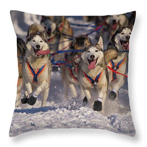 Snow Throw Pillow featuring the photograph Iditarod Huskies by Alaska Photography