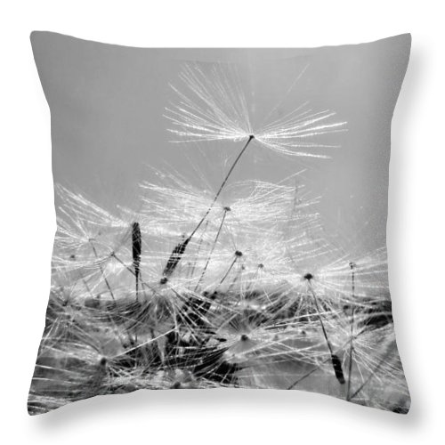 Dandelion Throw Pillow featuring the photograph If I Had One Wish by Art Dingo