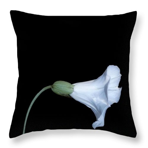 Still Life Throw Pillow featuring the photograph If I Were..they Would Love Me Too by Brian Raggatt