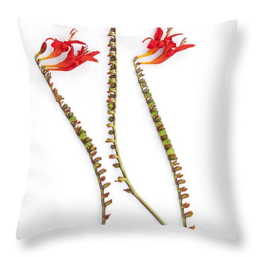 Crocosmia Throw Pillow featuring the photograph If Seahorses Were Flowers by Carol Leigh