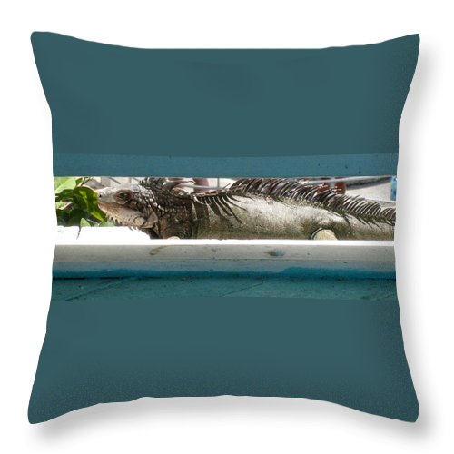 Animal Photographs Throw Pillow featuring the photograph Iggy by Jennifer E Doll
