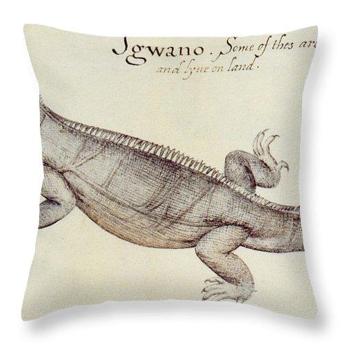 Iguana Throw Pillow featuring the painting Iguana by John White